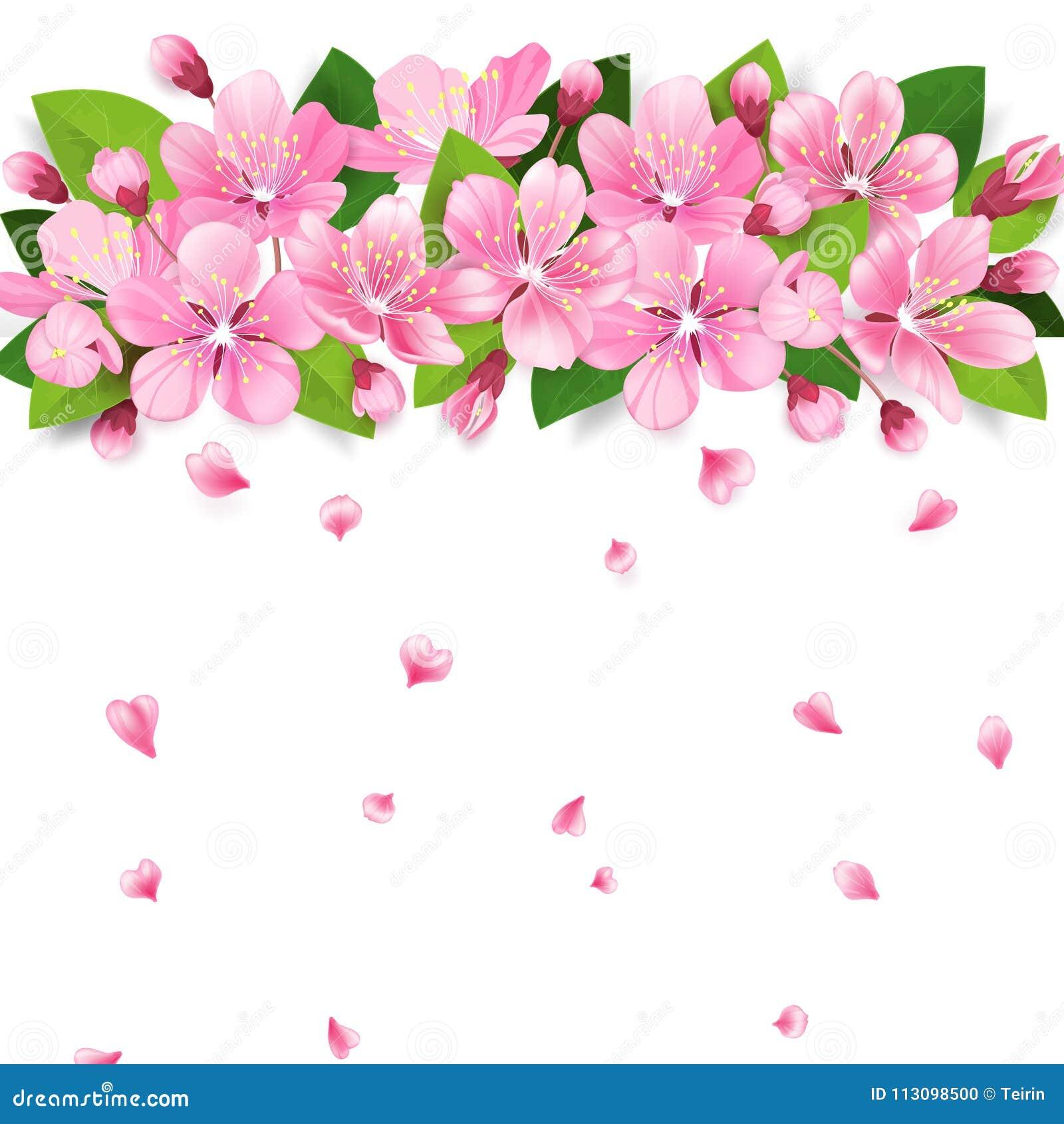 Den realistiska filialen för det sakura Japan körsbär- eller äppleträdet med att blomma blommar Rosa blommagräns med fallande kro