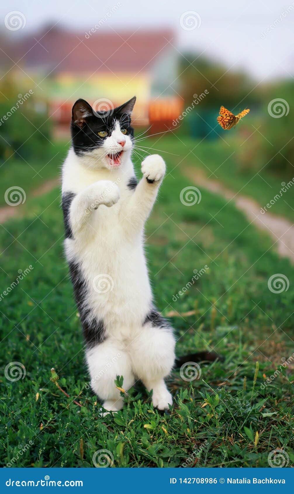 Den roliga kattungen i en solig trädgård för sommar fångar en orange fjäril för flyga som hoppar på dess bakre ben i klart väder