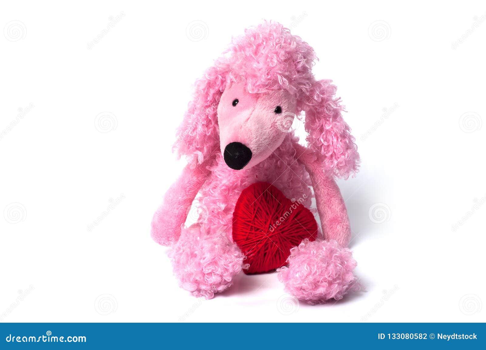 Den rosa pudeln leker med röd hjärta som sitter på vit backg