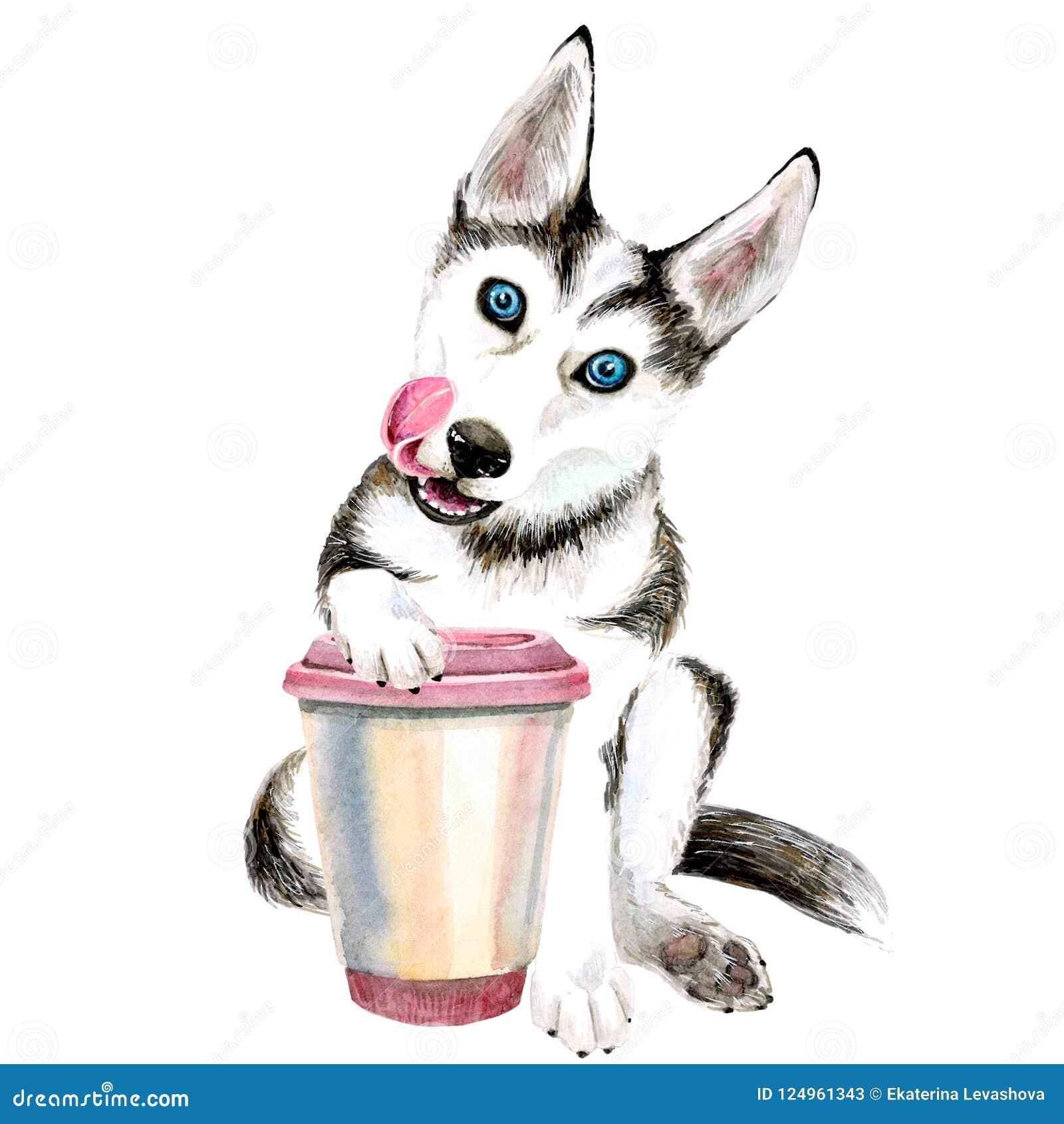 Den skrovliga hunden dricker kaffe från ett rosa exponeringsglas gullig valp isolerat