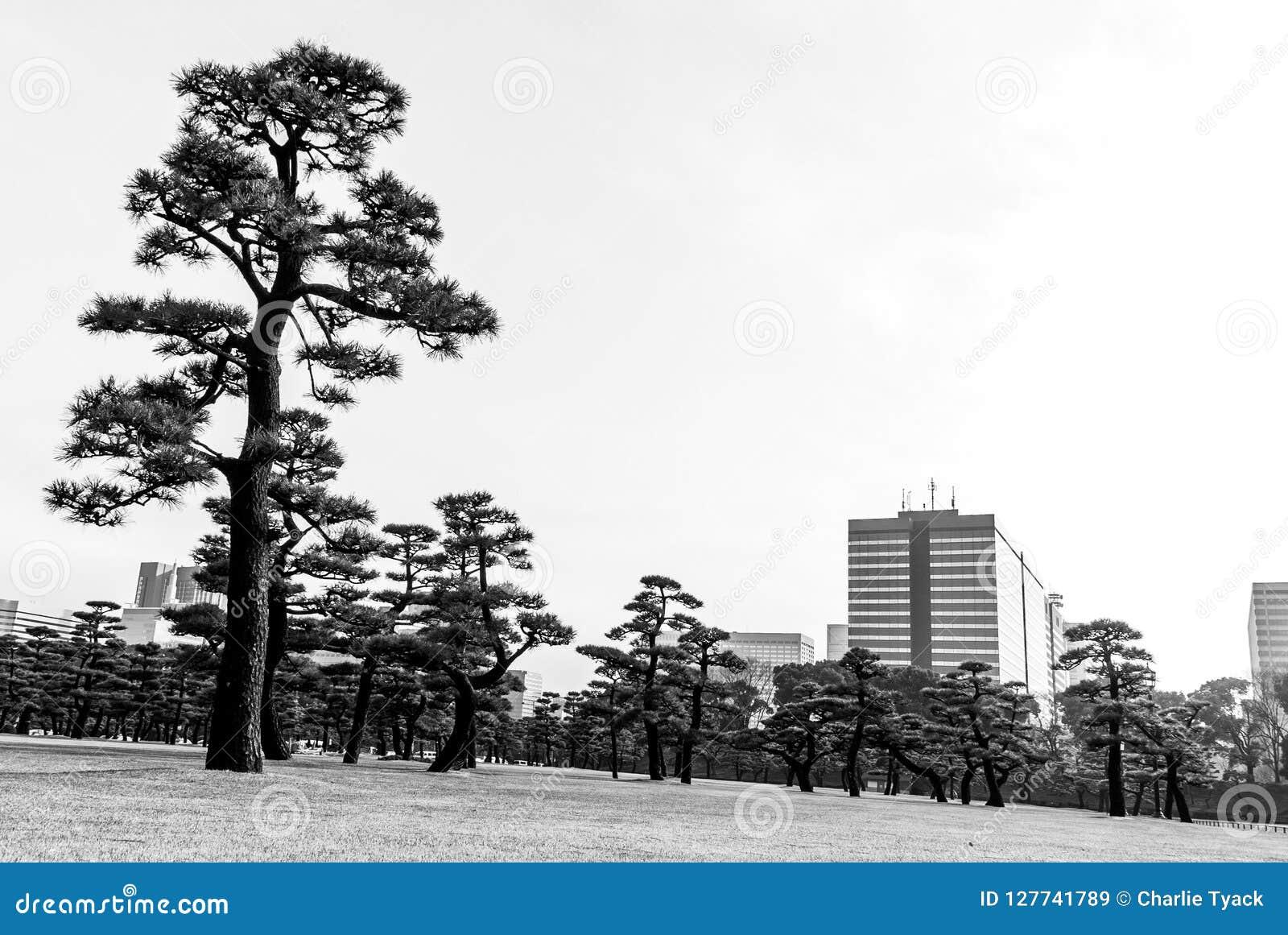 Den stads- skogen - Tokyo - staden och träd möter
