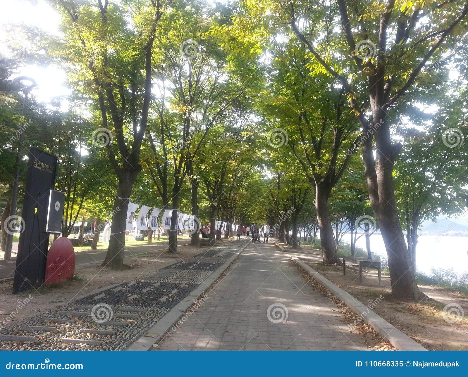Den stenlade fot- vägen eller går vägen med träd på sidor för allmänhet går