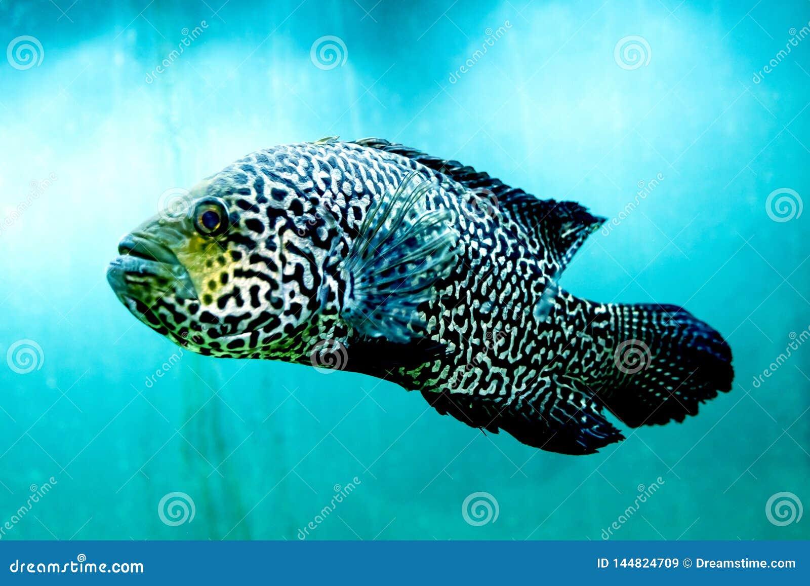 Den stora fisken i klart och klart blått vatten, stänger sig upp skönheten av den undervattens- världen