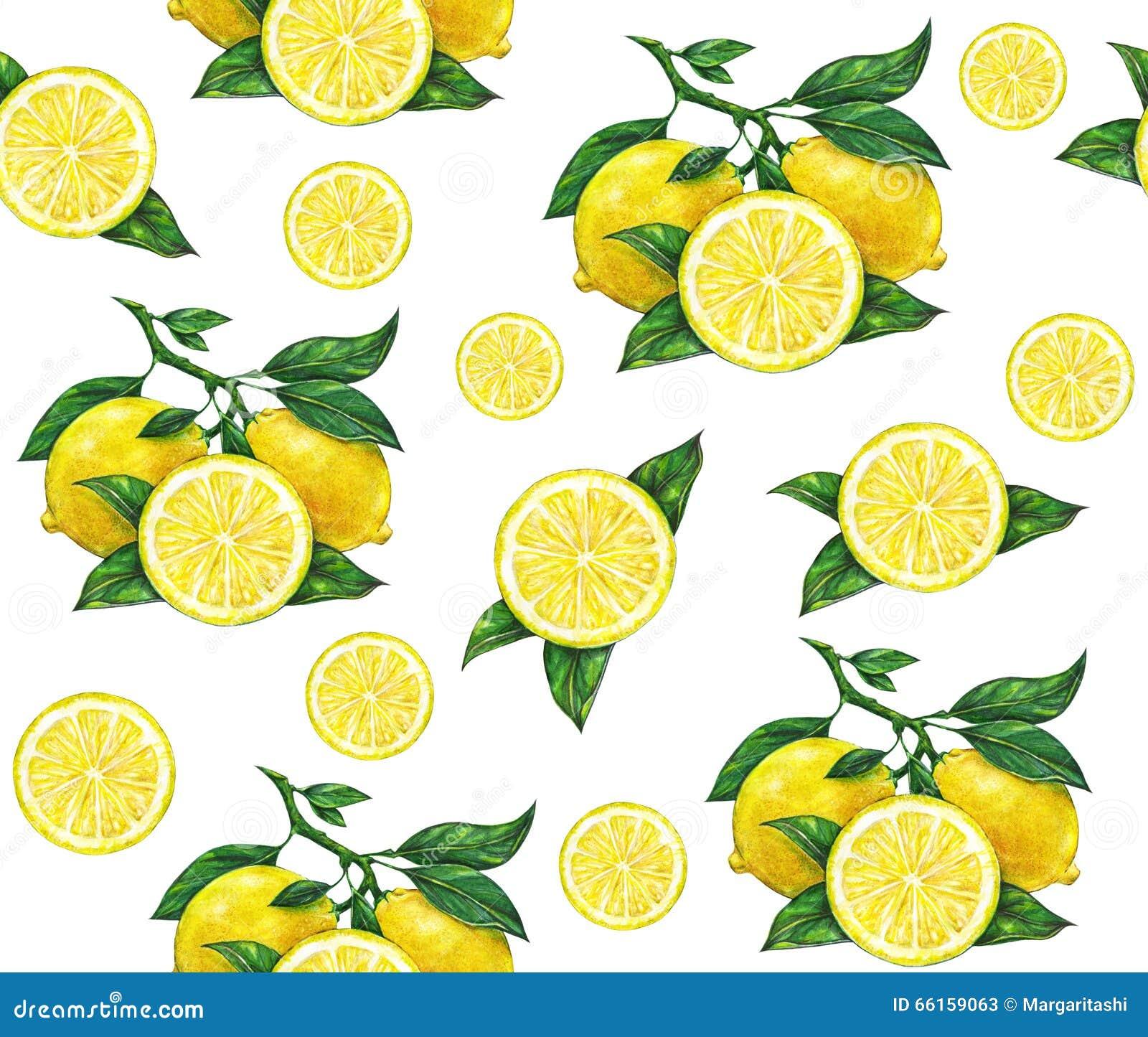 Den stora illustrationen av den härliga gula citronen bär frukt på vit bakgrund Teckning för vattenfärg av citronen seamless mode