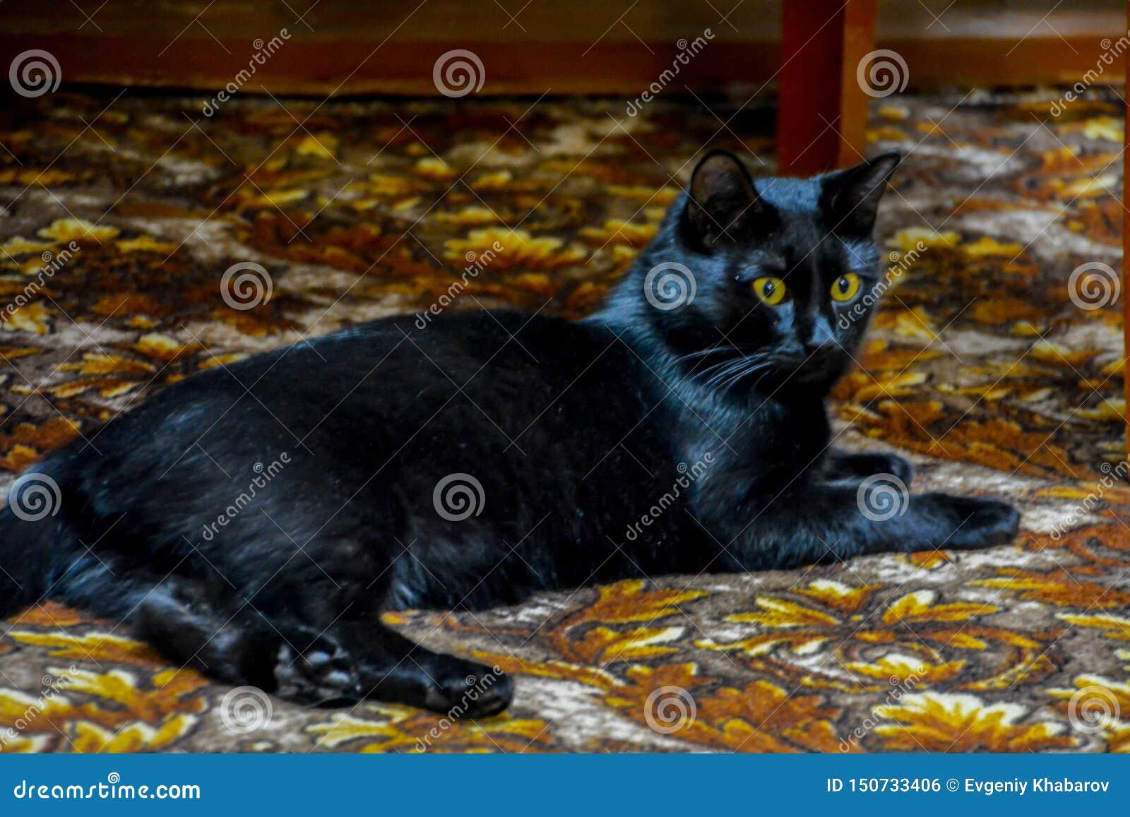 Den svarta katten med gula ögon som ligger på mattan