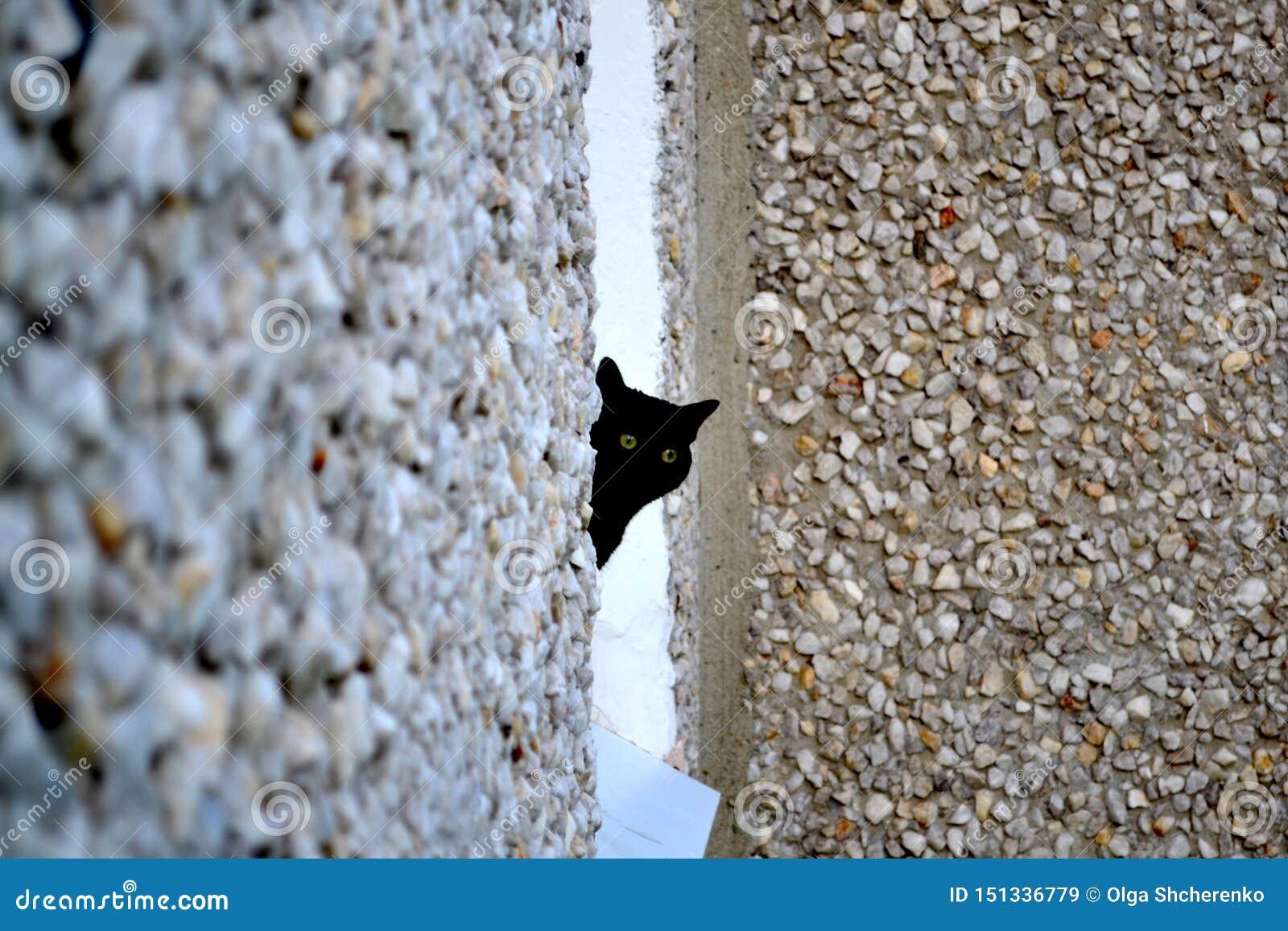 Den svarta katten ser ut ur fönstret