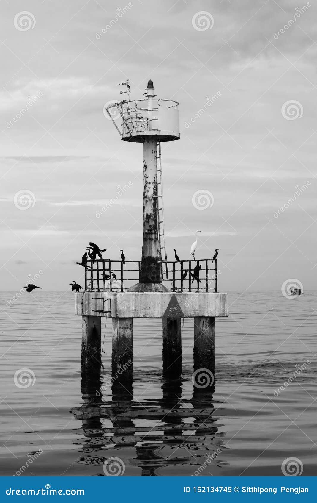Den svartvita bakgrunden av fyren med fåglar i havet, Thailand