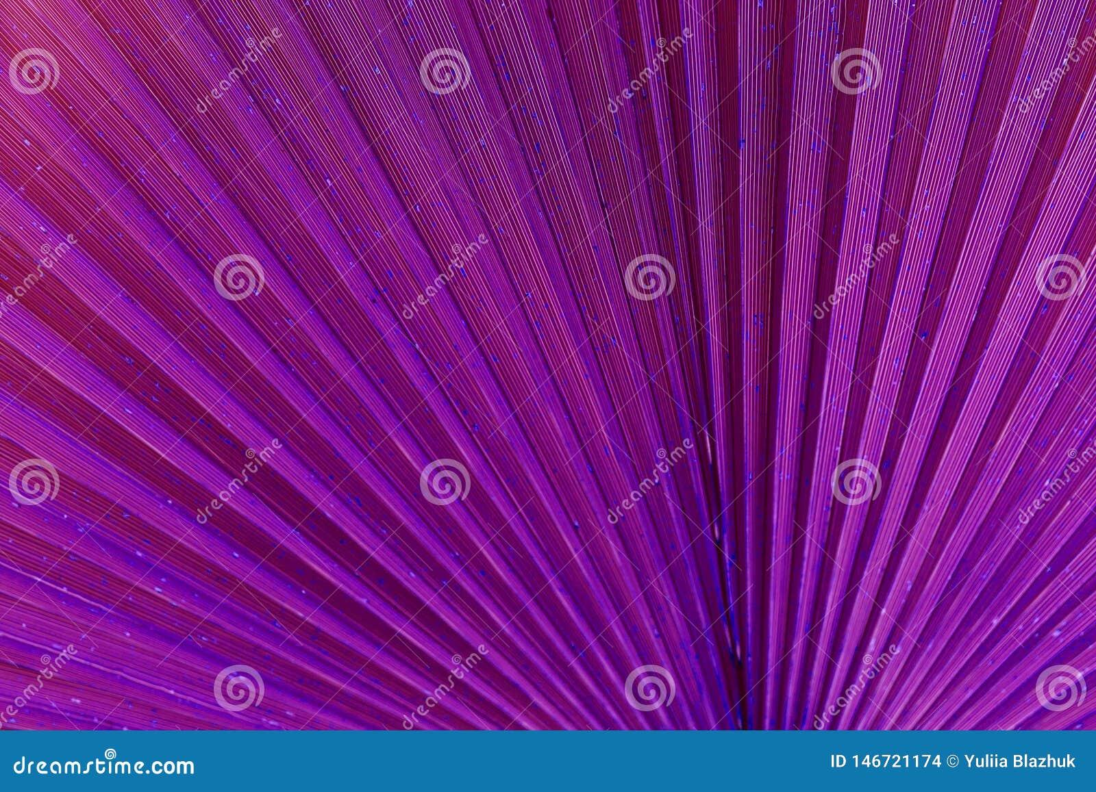 Den t?ta leafen g?mma i handflatan upp Abstrakt bakgrund, purpurfärgad overklig signal