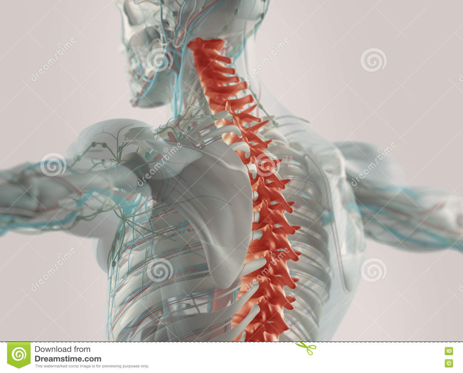 Den tillbaka humanen smärtar