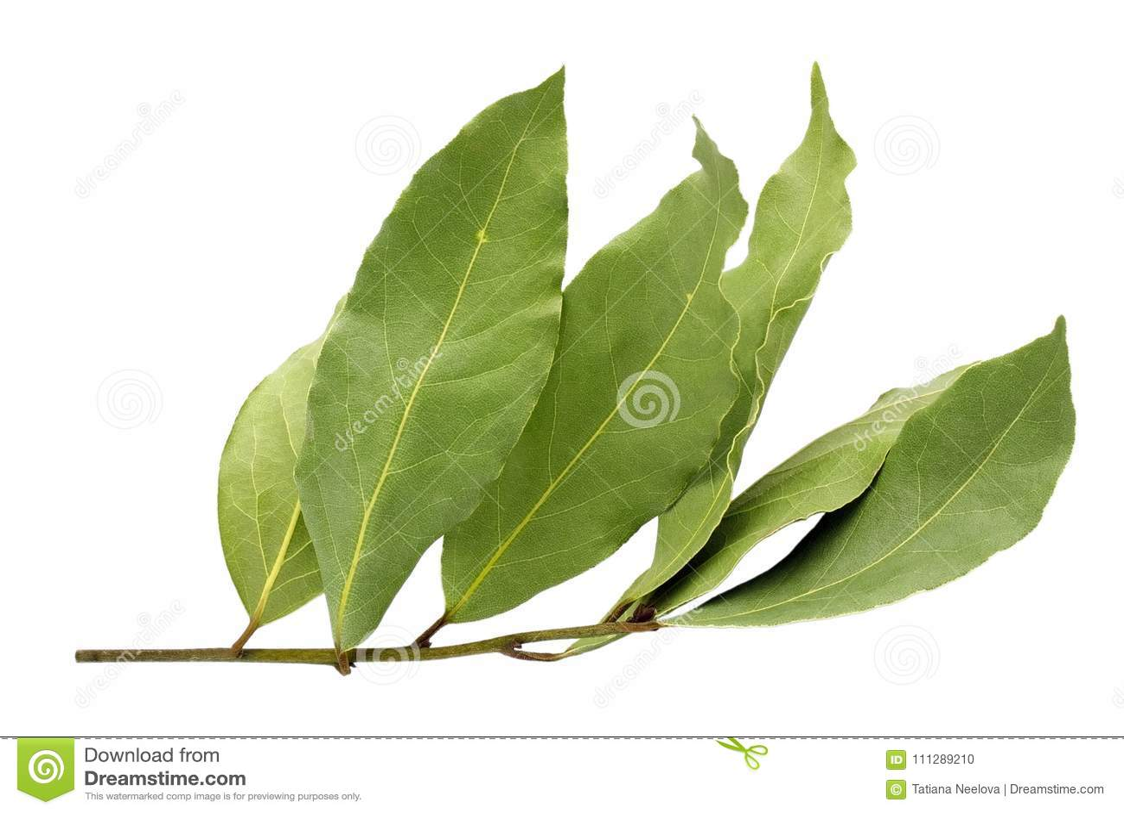 Den torkade aromatiska lagerbladen fattar isolerat på en vit bakgrund Foto av lagerfjärdskörden för ecomatlagningaffär Antioxidan