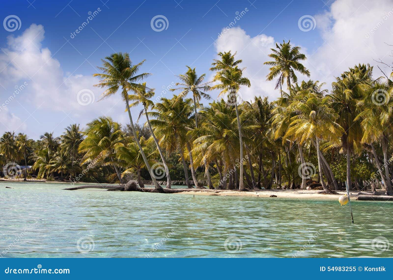 Den tropiska ön med palmträd i havet