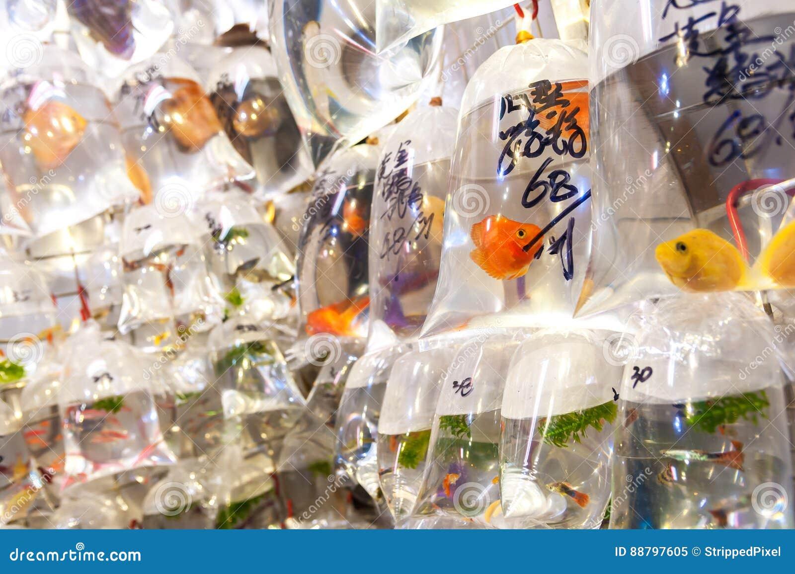 Den tropiska fisken som hänger i plastpåsar på Tung Choi Street, går