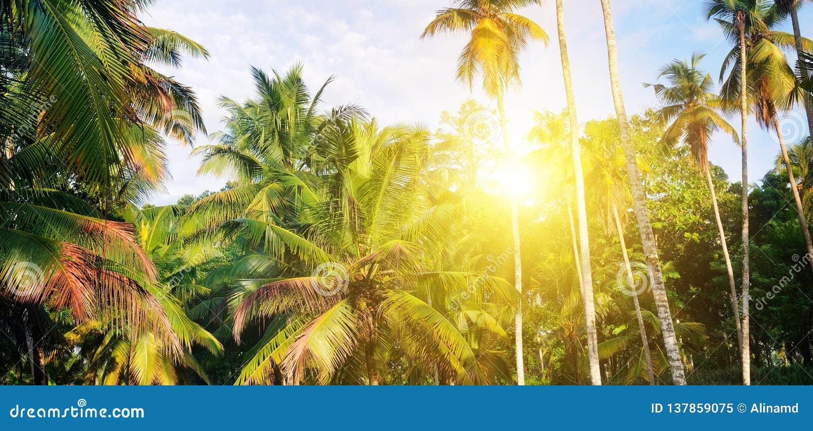 Den tropiska trädgården med kokosnöten gömma i handflatan och en ananaskoloni Shri Laka Brett foto