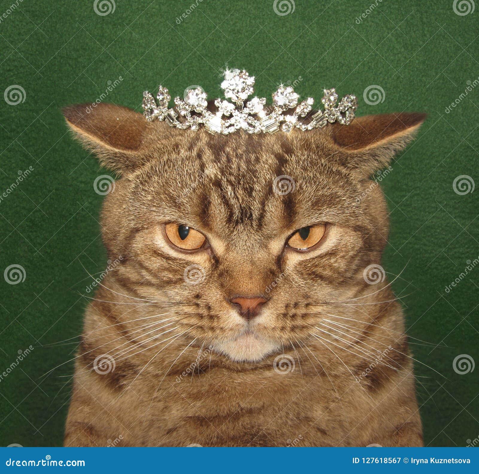 Den verkliga kattkonungen