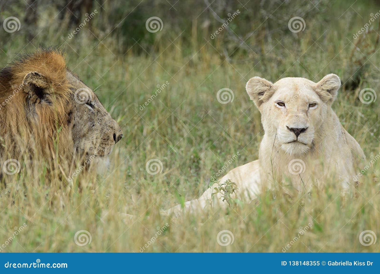 Den vita damen och hennes prins