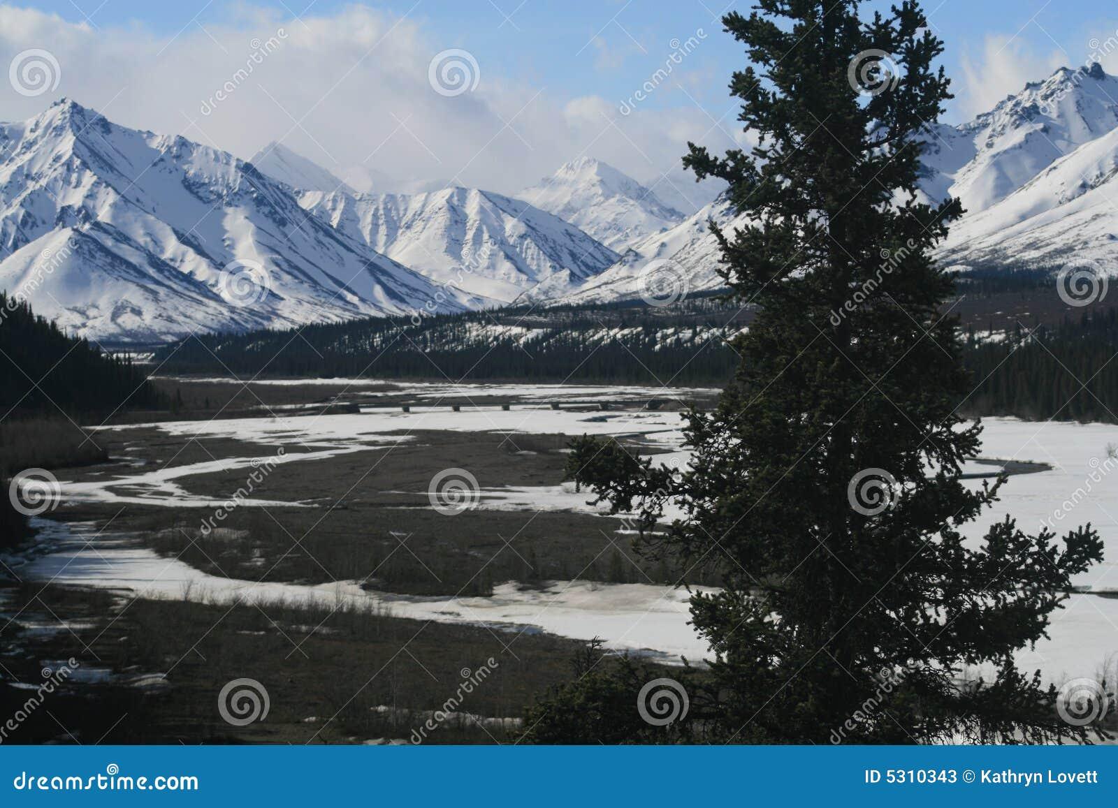 Download Denali Alaska immagine stock. Immagine di parco, paesaggio - 5310343