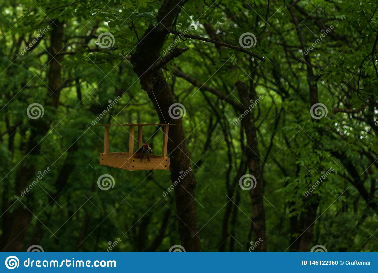 Denhövdade hackspetten producerar mat i skogfickeren gräver avmaskar i parkerar