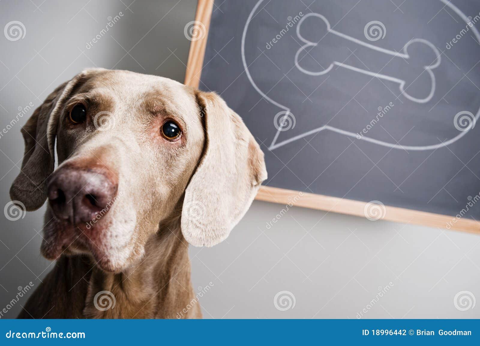 Denkender Hund