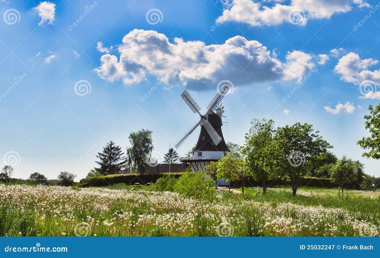 Denmark egeskovfyn mal wind