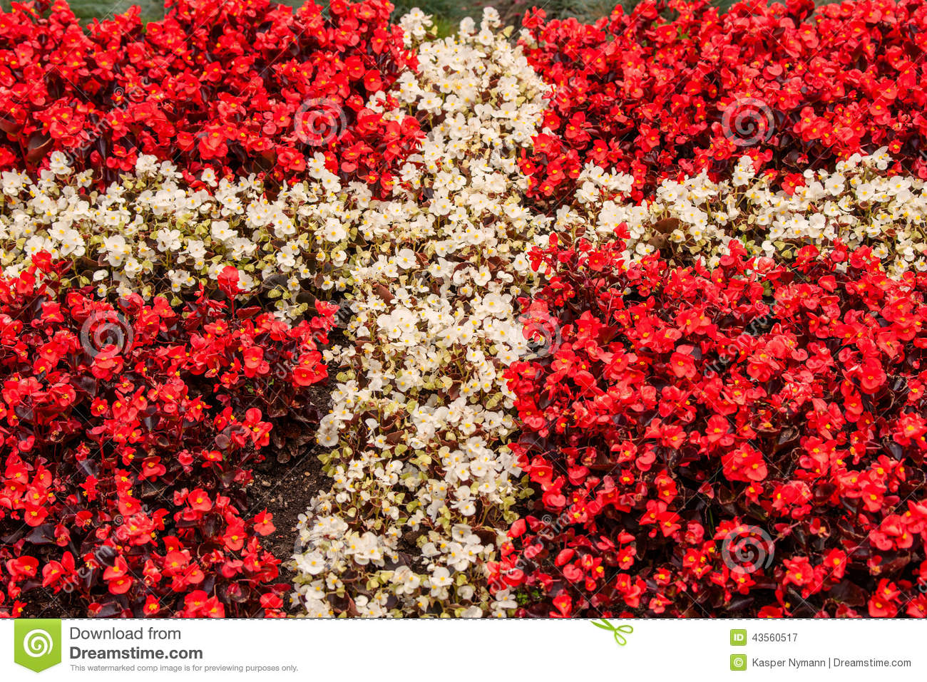 Denmark Flag Made Out Of Flowers Stock Image Image Of Icon Object