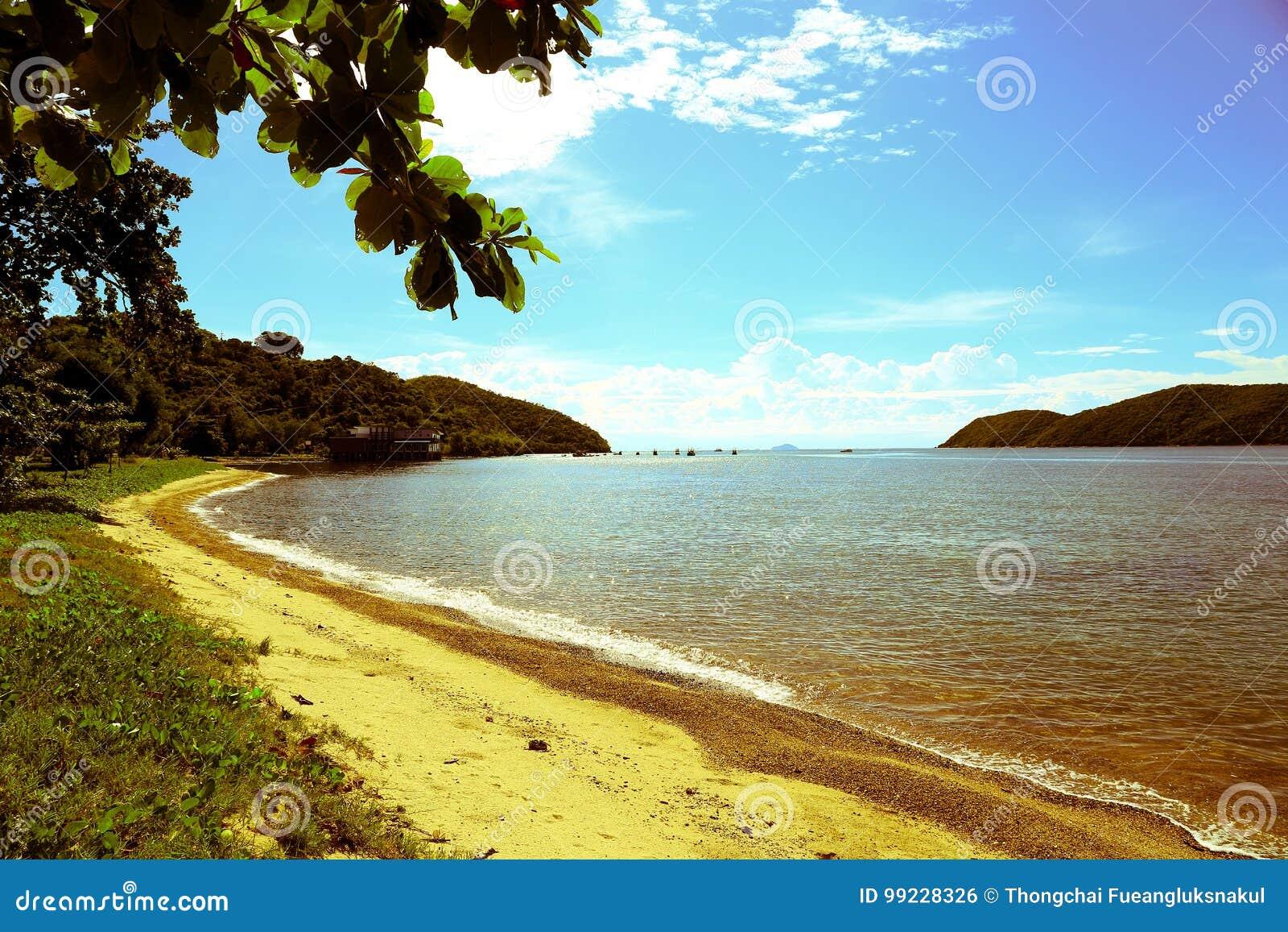 Denna plaża z niebieskim niebem, chmurą, drzewami i górami,