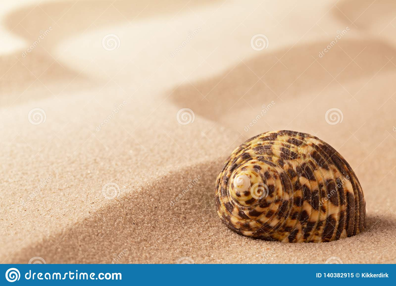 Denna skorupa na pluskoczącym plażowym piasku