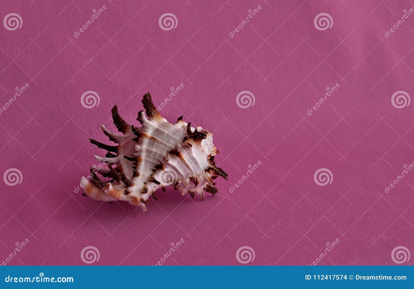 Denna skorupa odizolowywająca na różowym tle