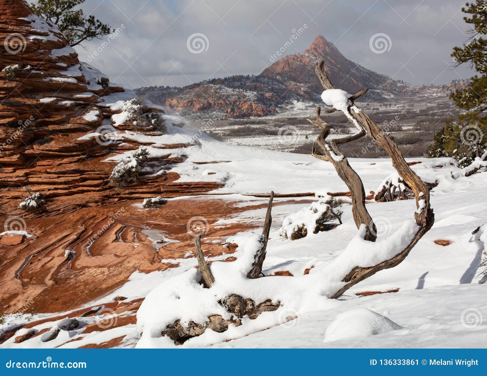 Denna vinterplats har slickrock, windblown snö, deadwood och berg
