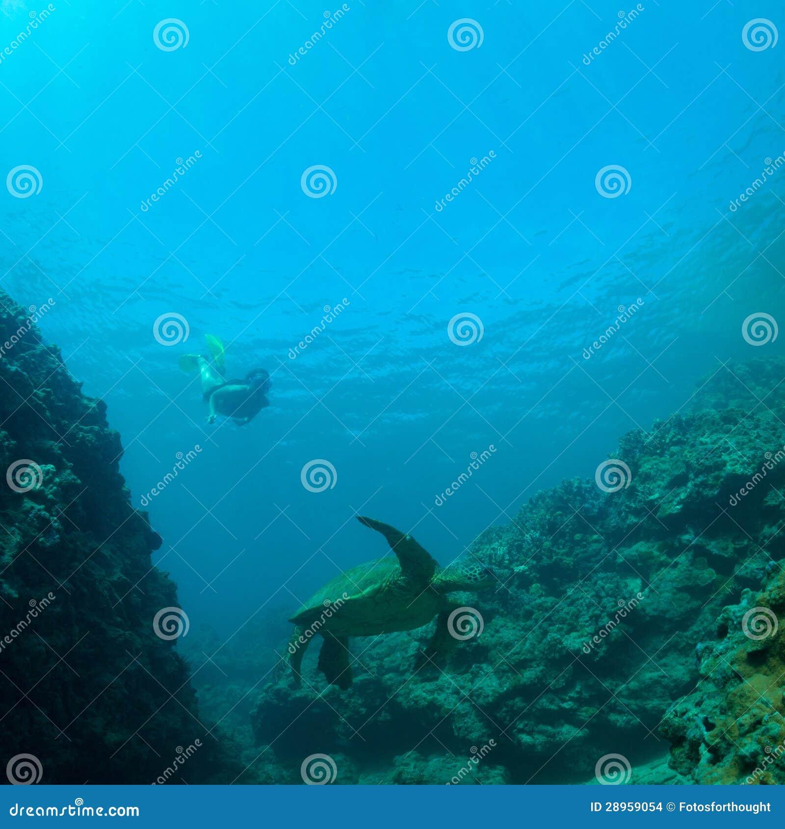 Denny żółw i snorkeler