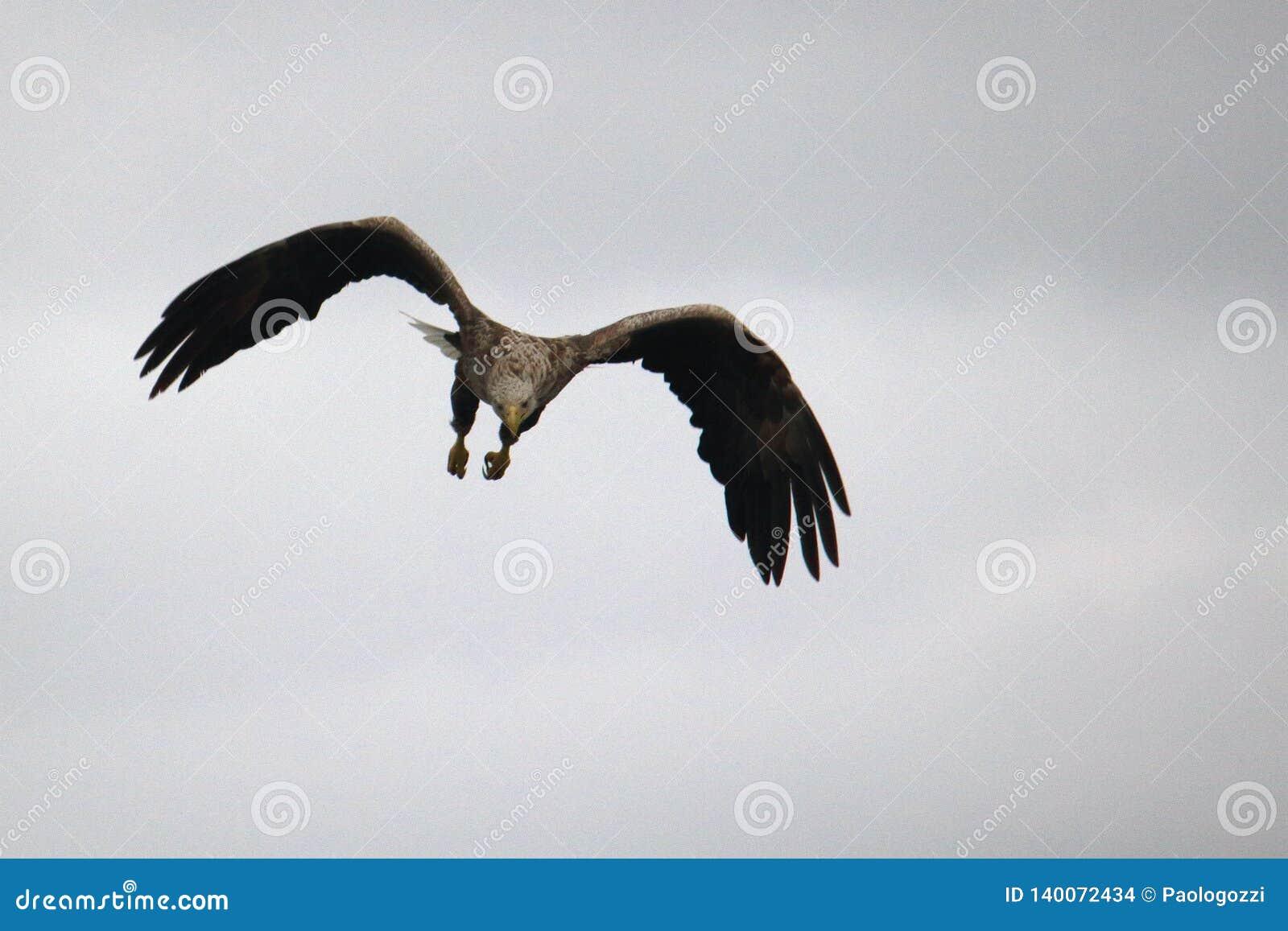 Denny Eagle po unikać karambol szukać niektóre jedzenie
