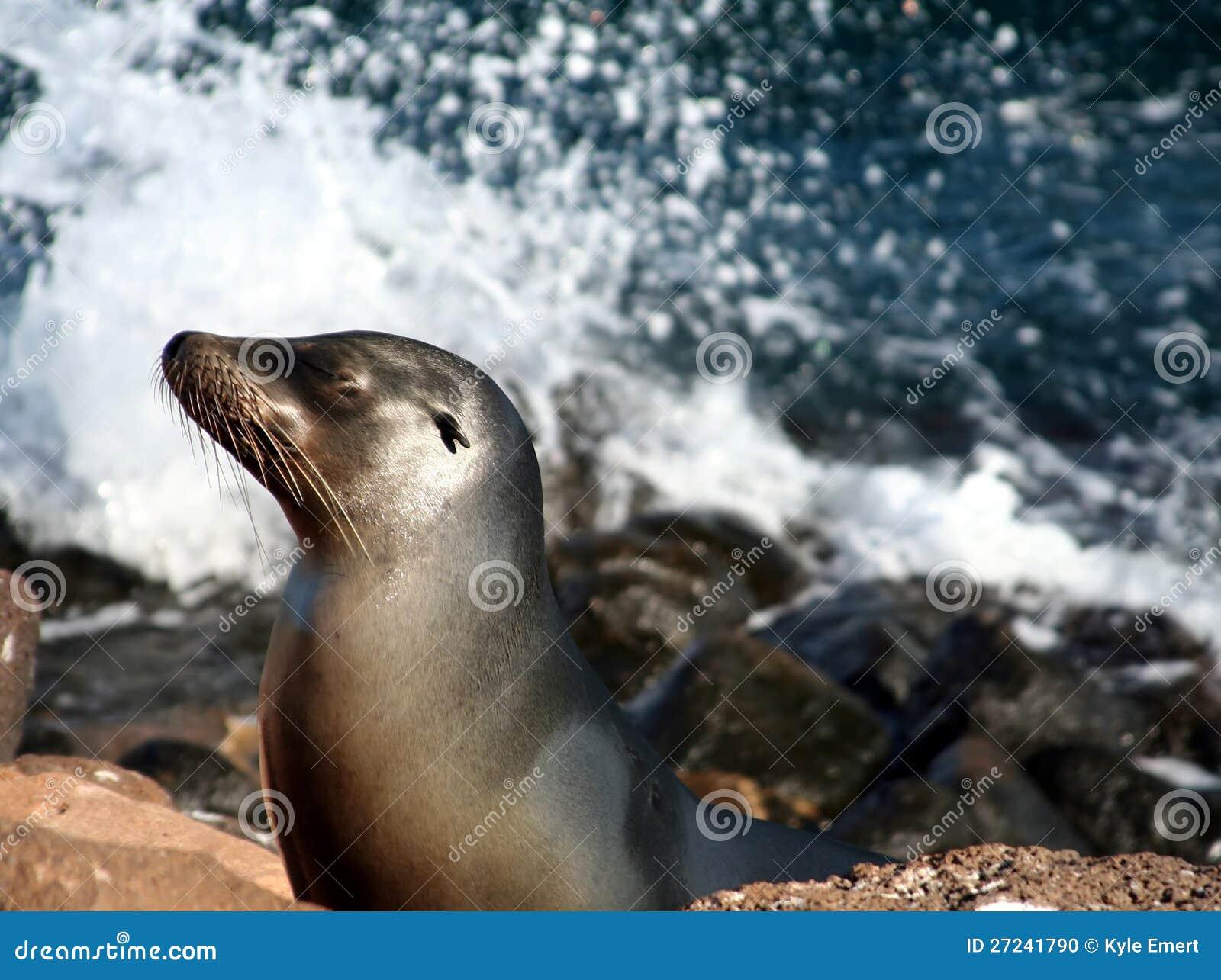 Denny Galapagos lew