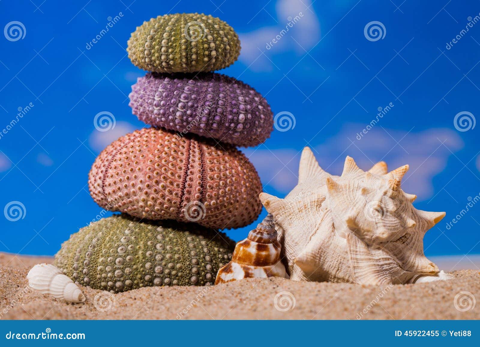 Denny jeż łuska na piaska i niebieskiego nieba tle