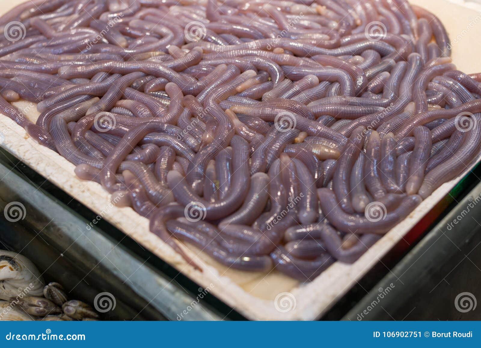 Denny jedzenie, Sipunculus nuclus