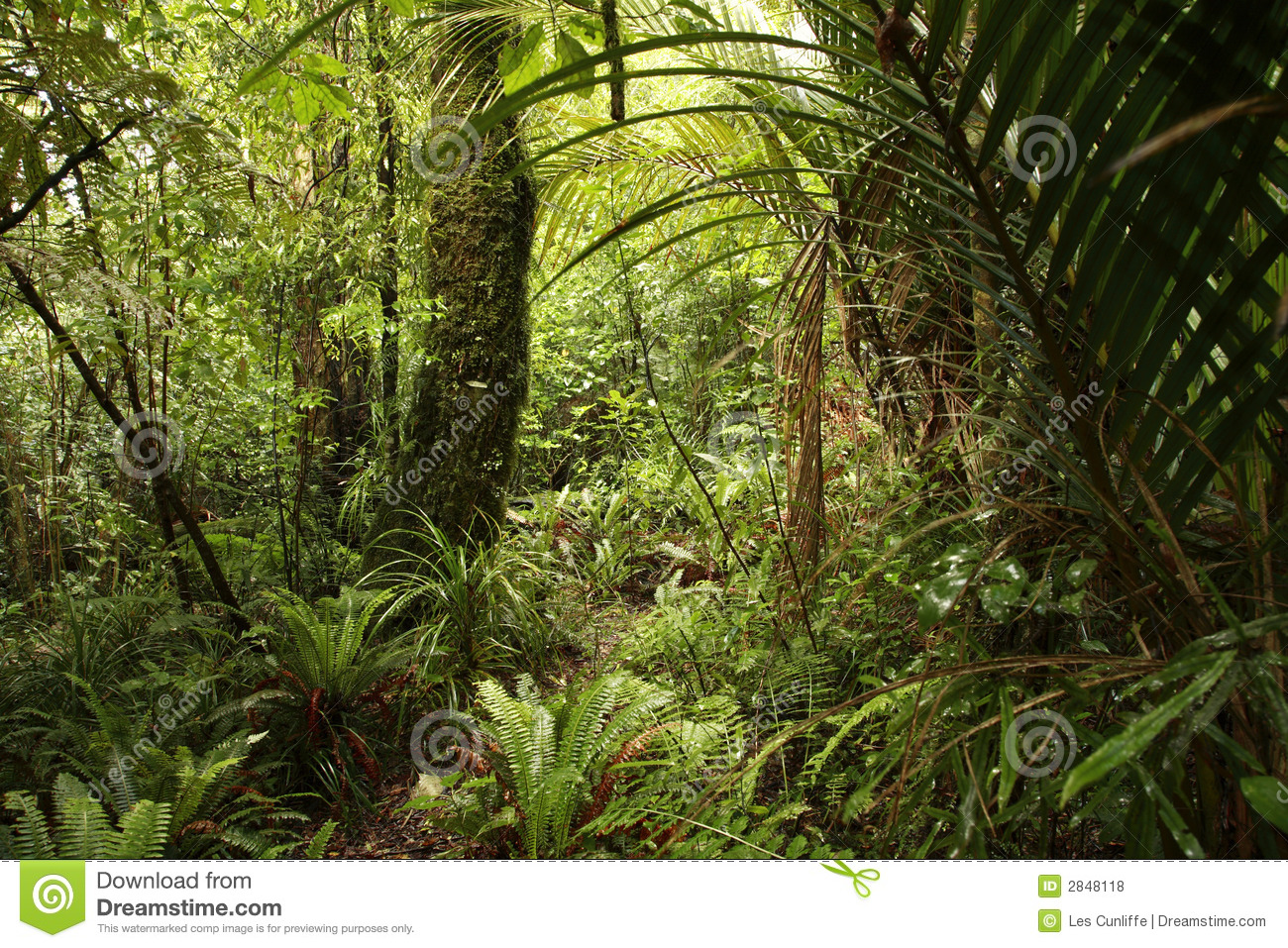 Dense Jungle Stock Photo. Image Of Lush, Flora, Forests