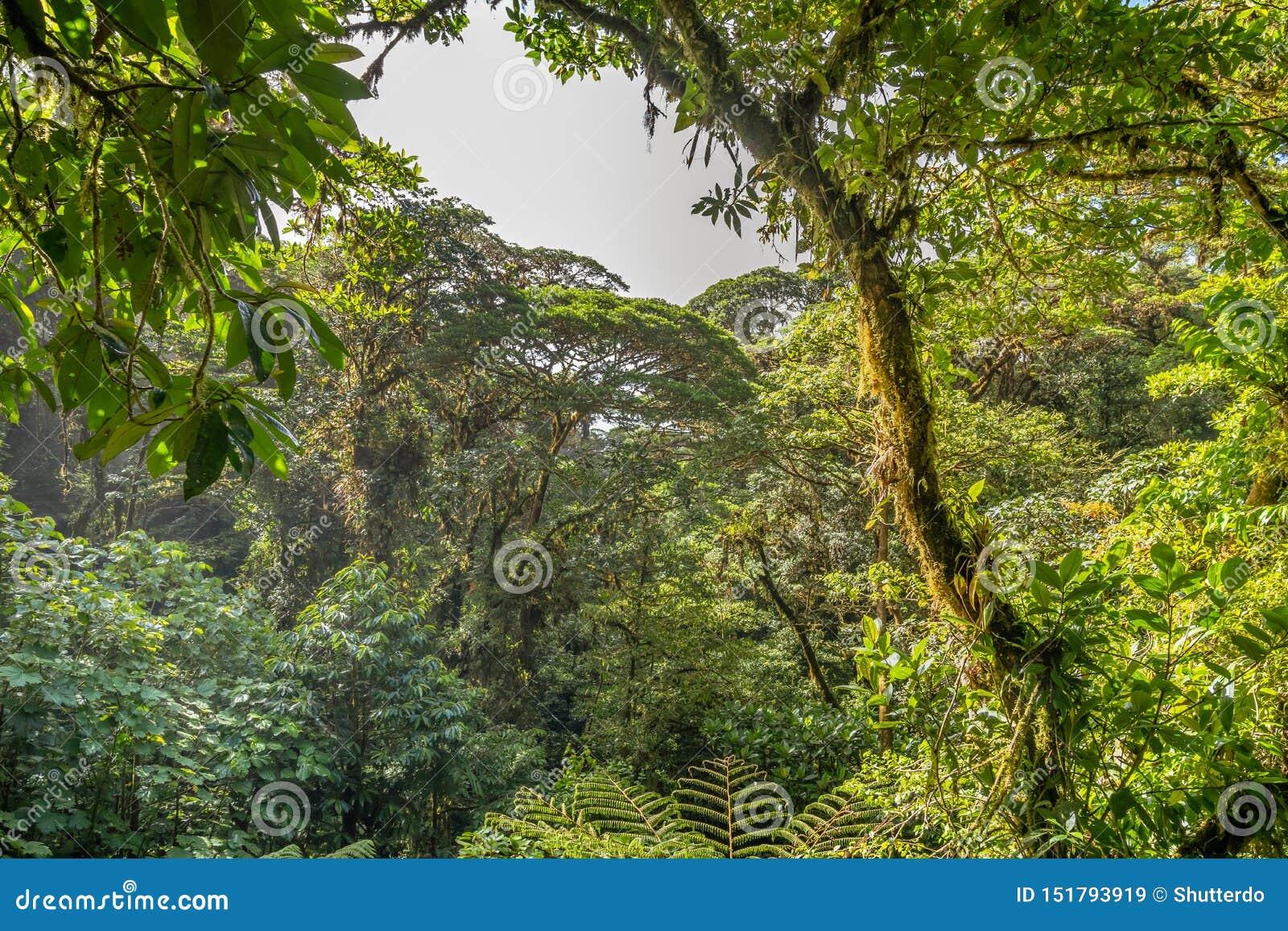 Dense jungle vegetation as seen from a canopy bridge