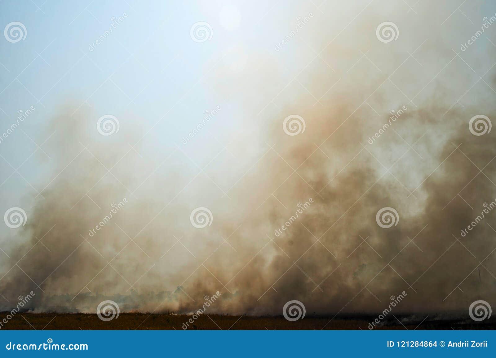 Dense smoke rising from a fire