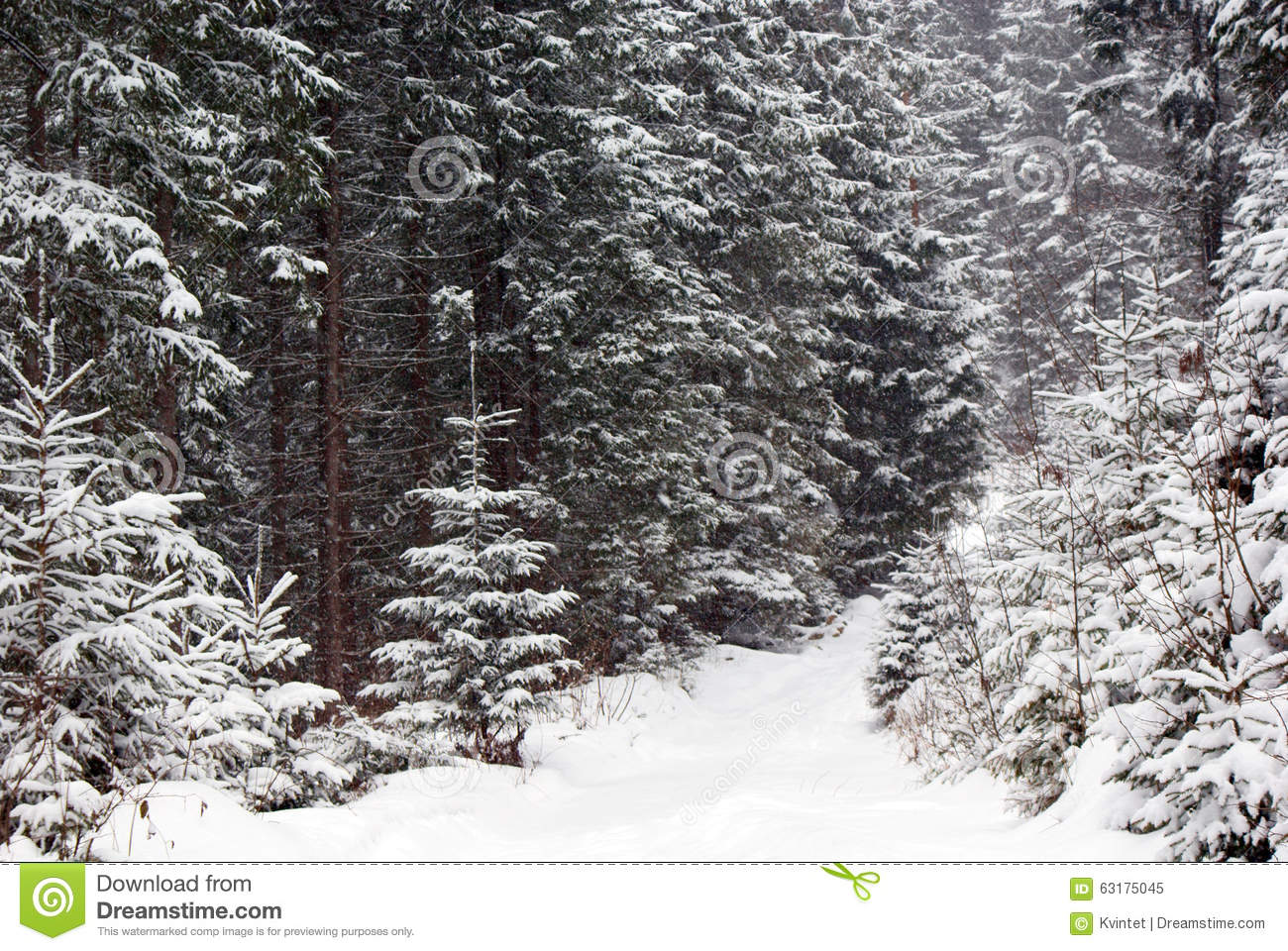 snowy fir trees forest - photo #49