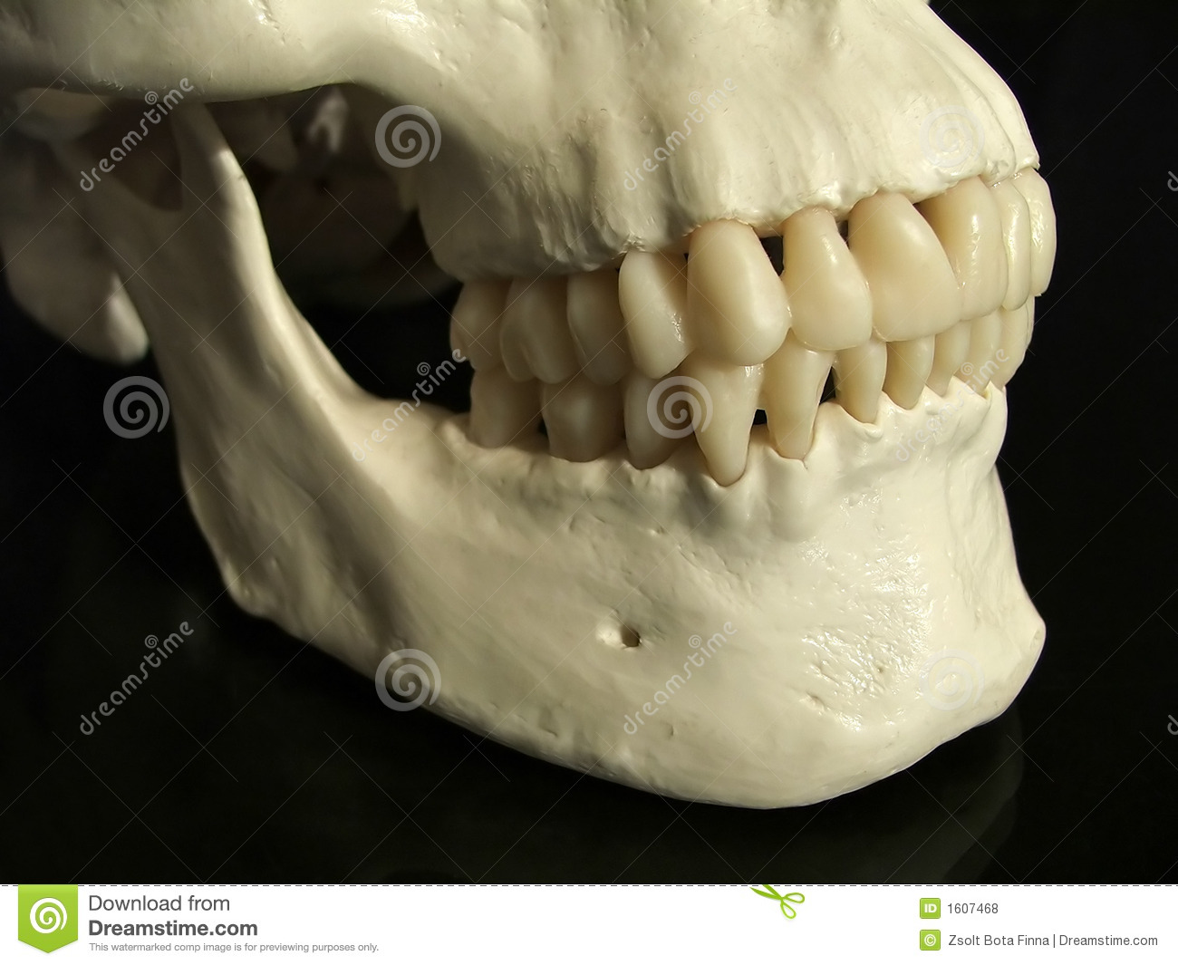 Dental Occlusion Royalty Free Stock Photos - Image: 1607468