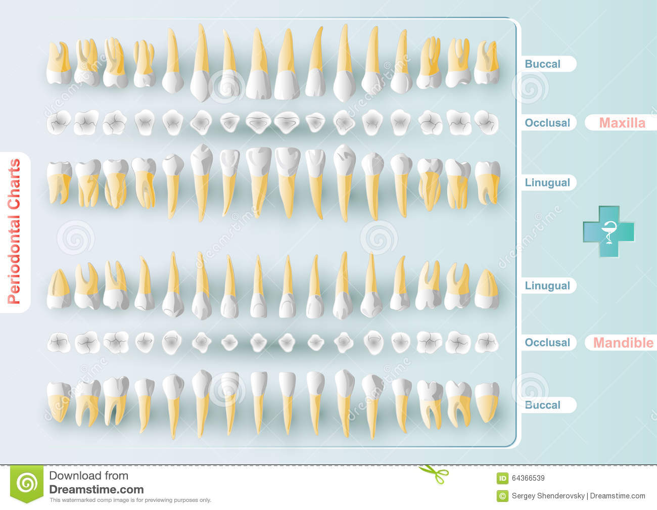 Hygienist stock illustrations 520 hygienist stock illustrations dental and periodontal charting form table dental and periodontal charting in vector format it biocorpaavc Gallery