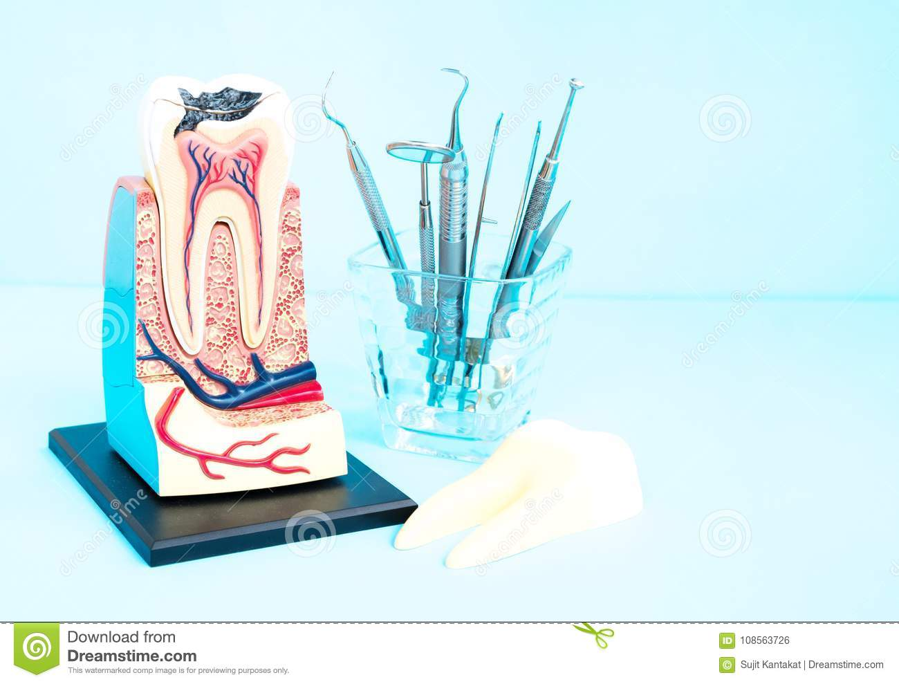 Dental Tools And Tooth Anatomy Stock Photo Image Of Nerve Root