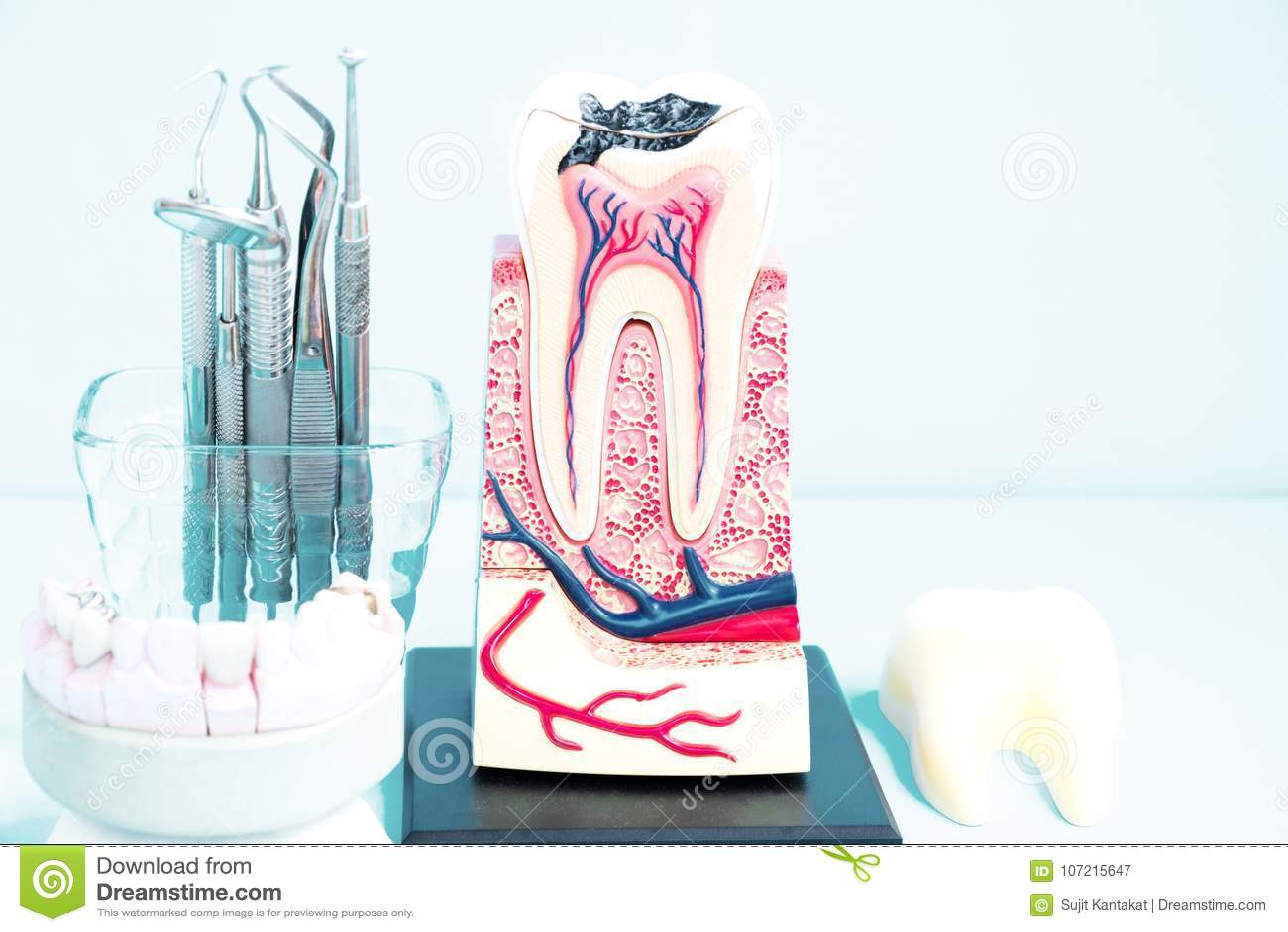 Dental Tools And Tooth Anatomy. Stock Image - Image of anatomy ...