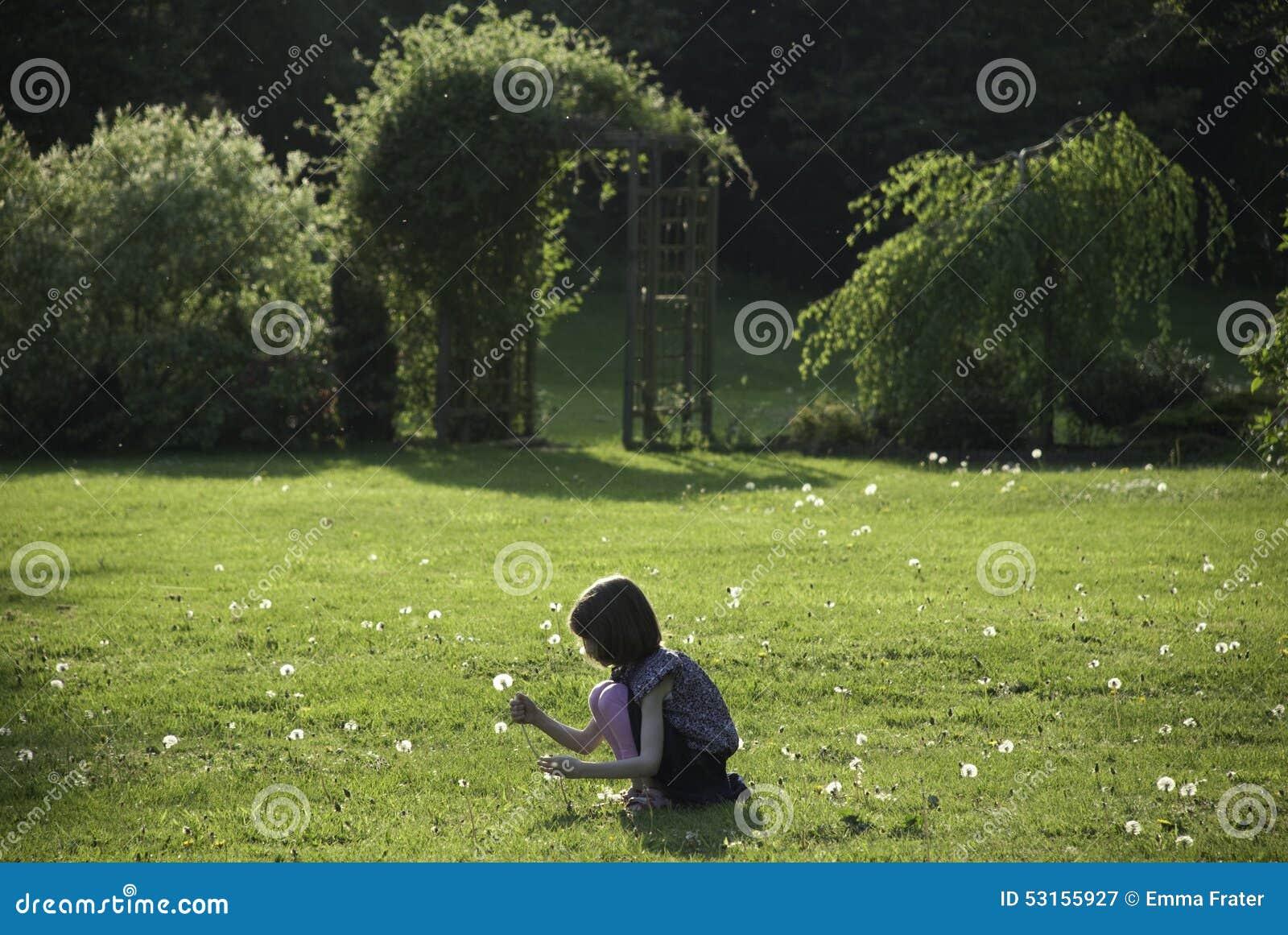 Dentes-de-leão de uma colheita da moça em um jardim ensolarado