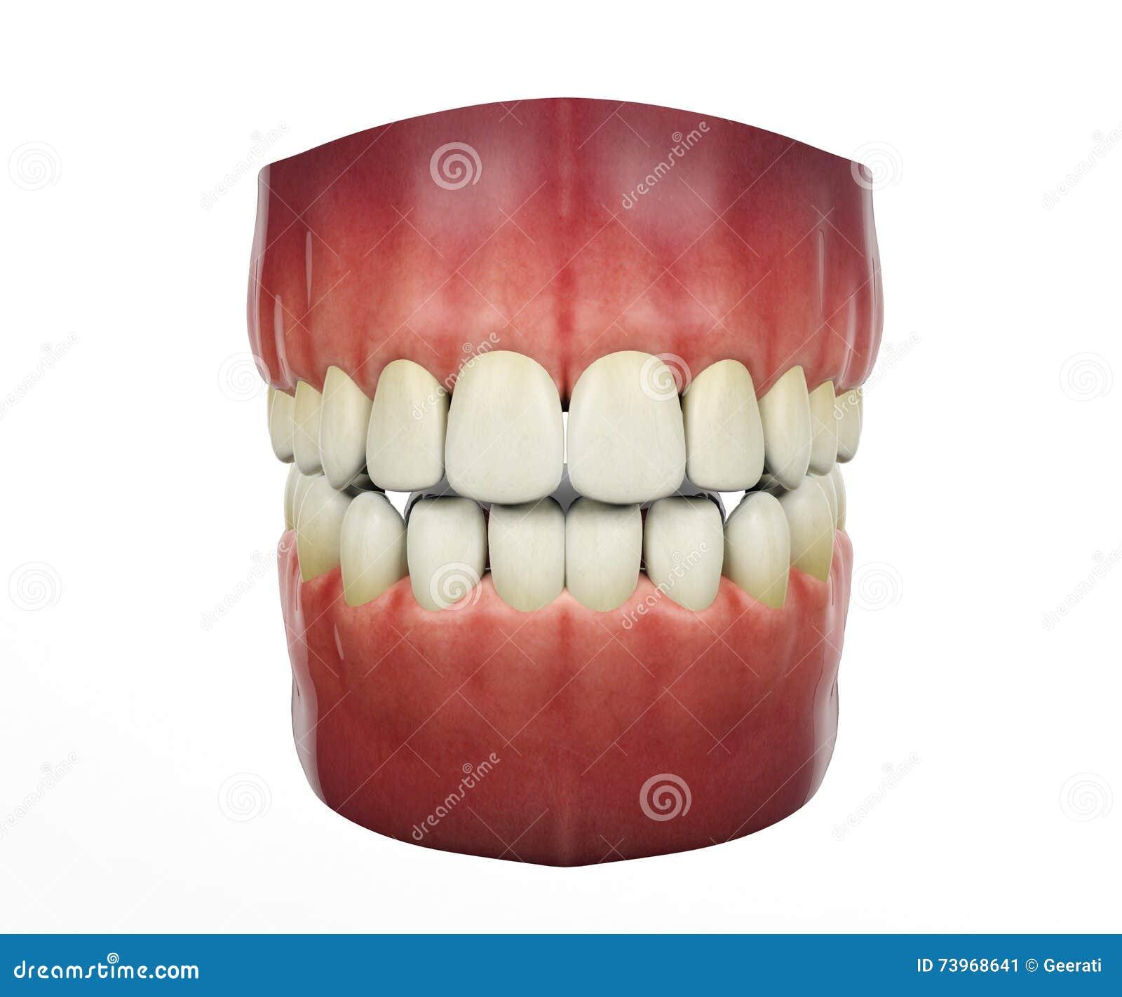 Dentes humanos no fundo branco