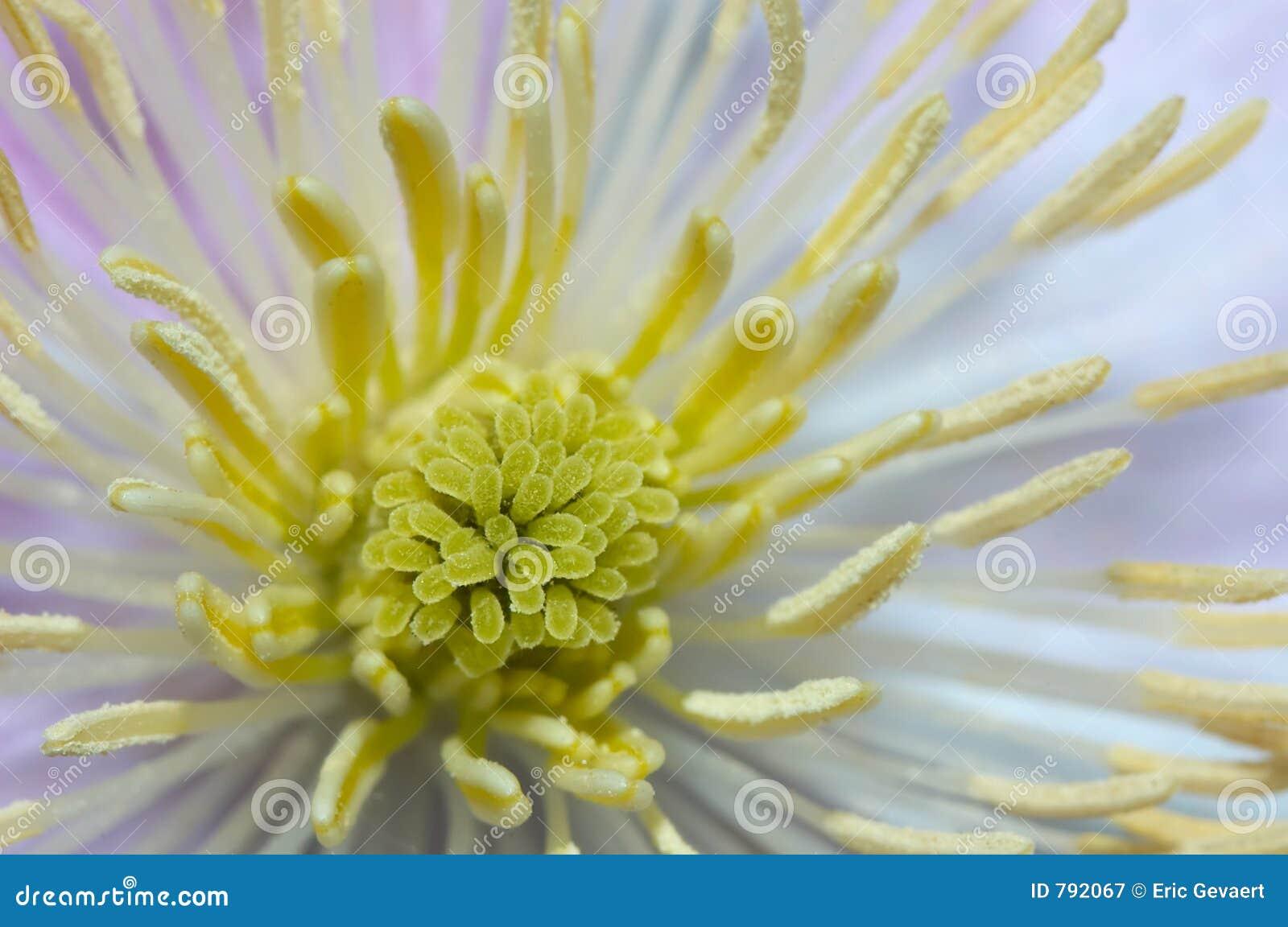Dentro de uma flor