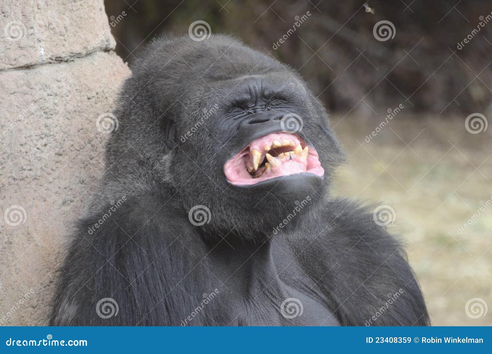 Dents de gorille