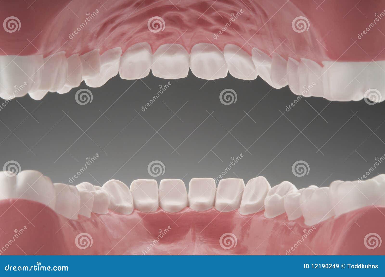 L Clamitans Dents et bouche int&#2...