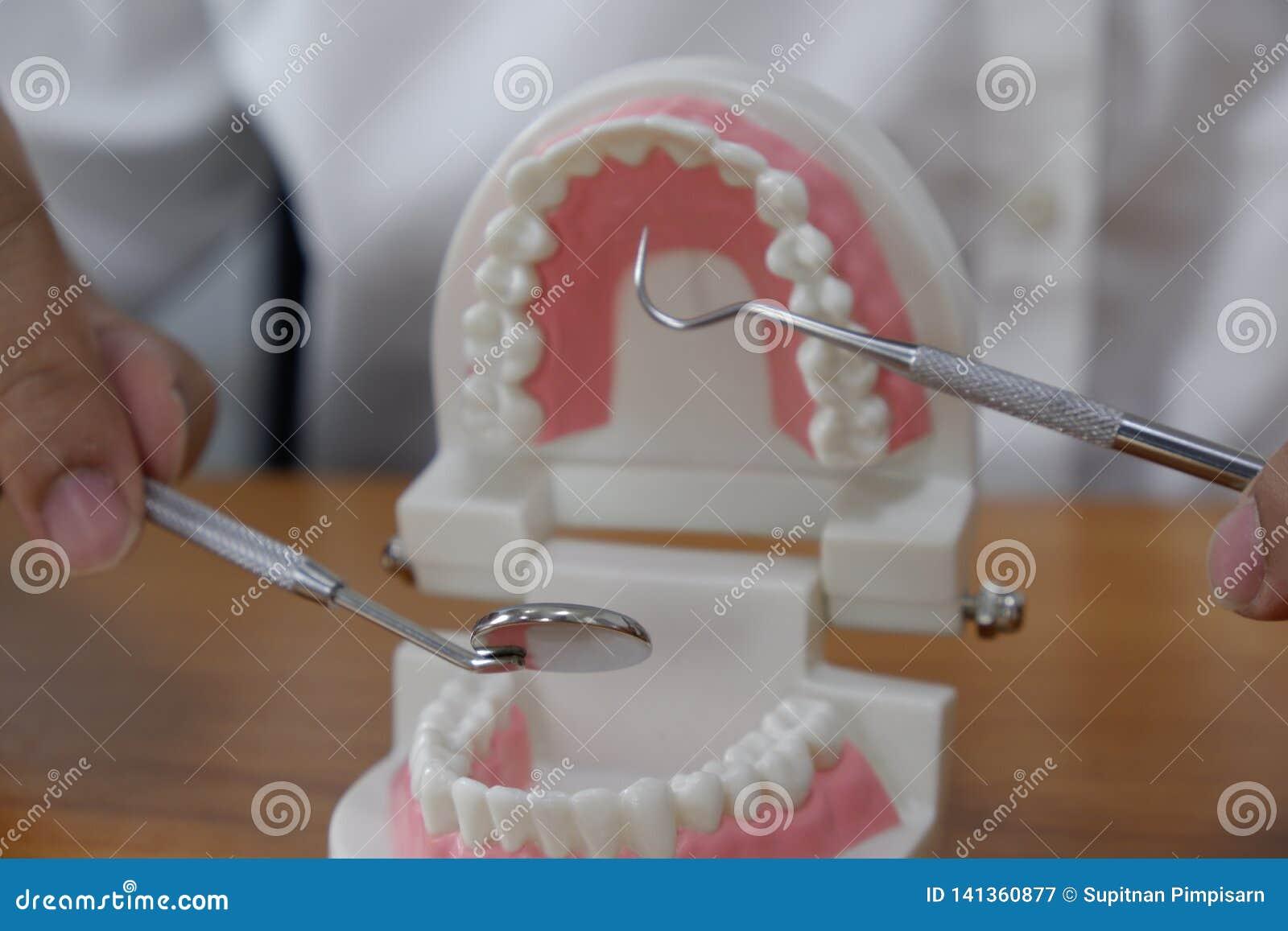 Dentysta używa narzędzia na zębach modeluje w stomatologicznego office/kliniki, stomatologicznego i medycznego pojęciu fachowym s
