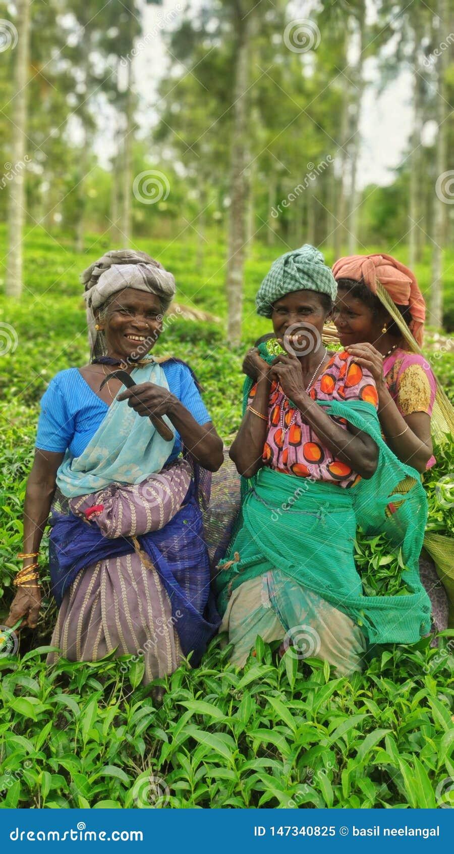Depenadores do chá
