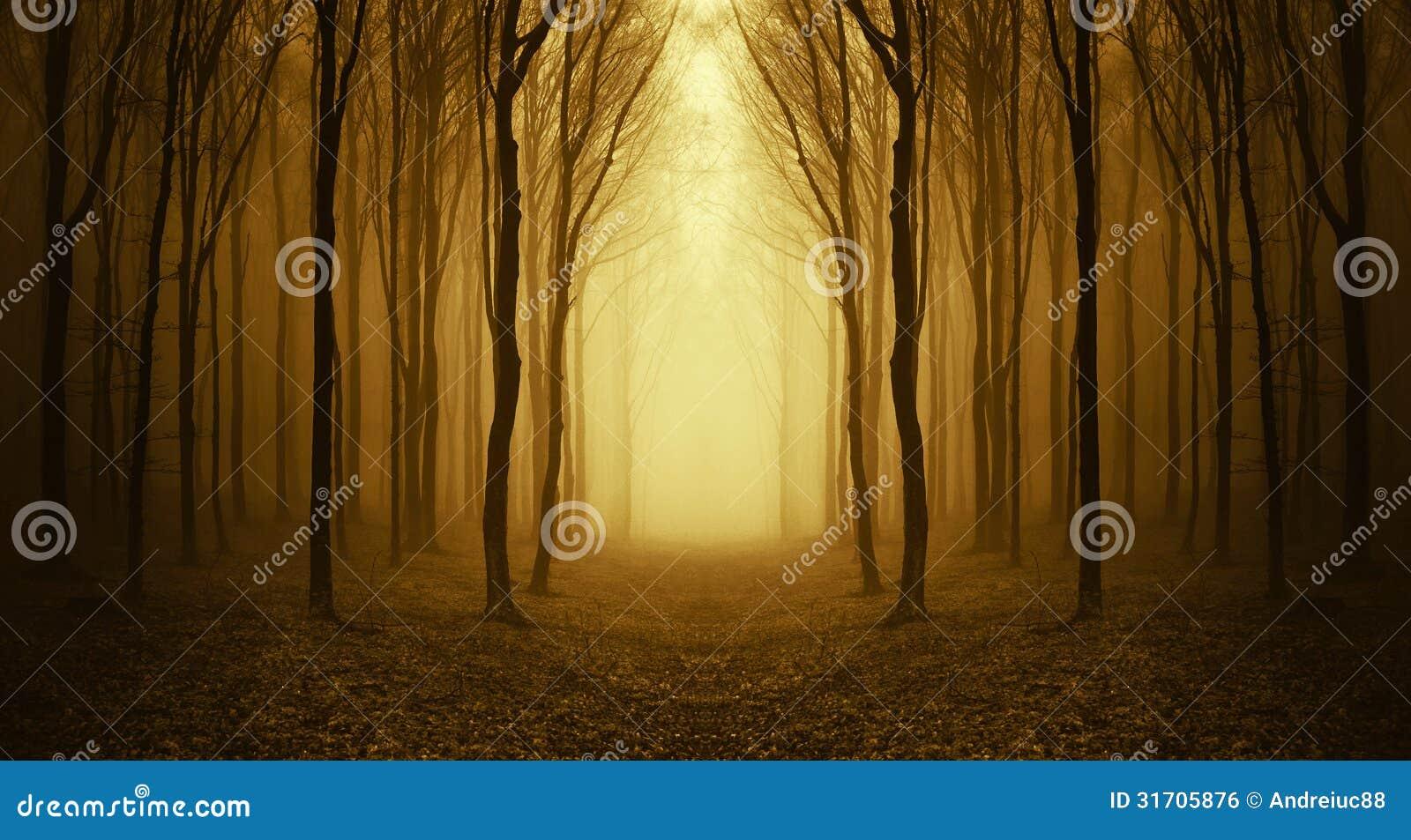 Depressione del percorso una foresta sconosciuta con nebbia in autunno