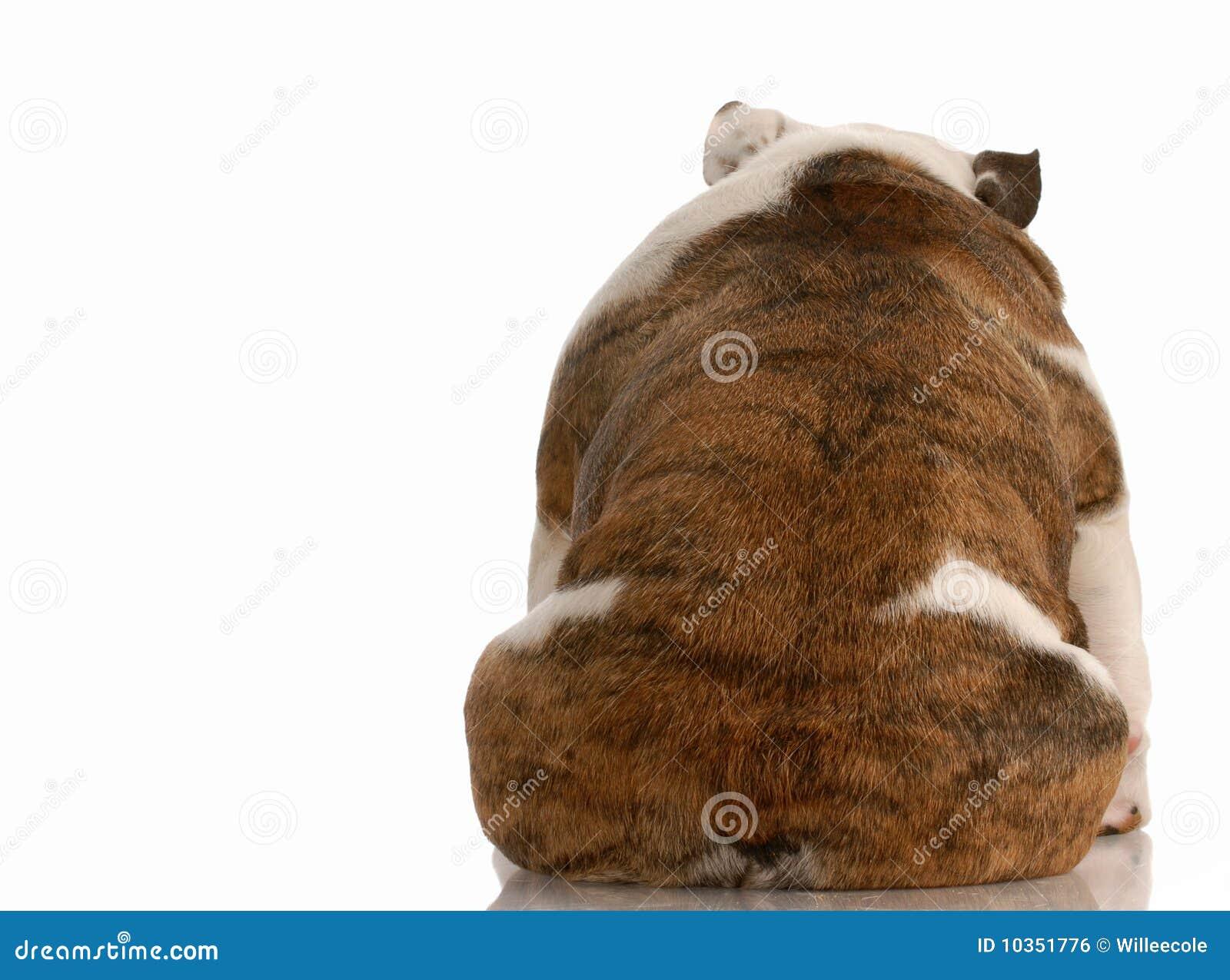 Deprimierter Hund